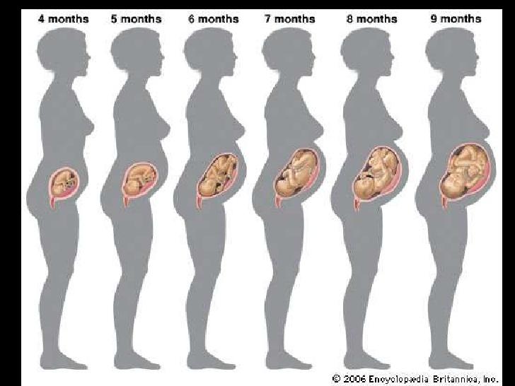 गर्भ मे शिशु का विकास