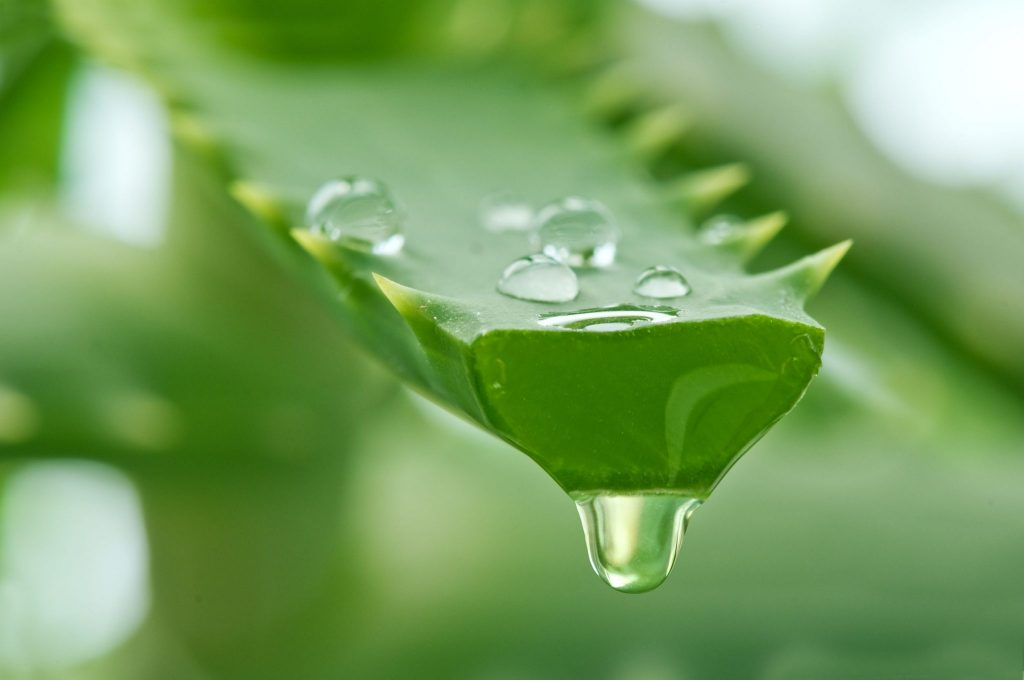 aloe vera health tips in hindi