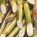 गन्ना के गुण गन्ने का रस पिने के फायदे हिंदी में जानकारी