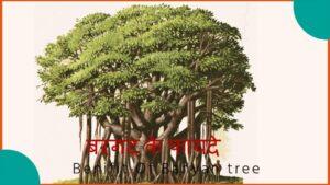 बरगत का पेड़ के फायदे हिंदी में