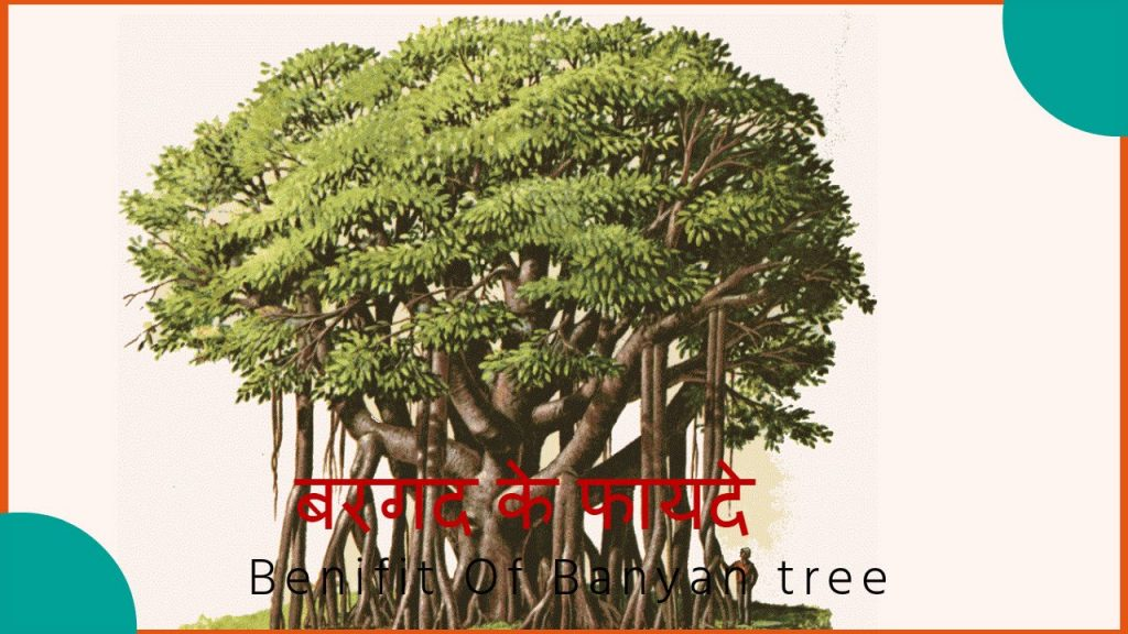बरगत का पेड़