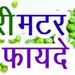 मटर के फायदे और नुकसान हिंदी में जानकारी