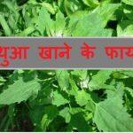 बथुआ खाने के फायदे हिंदी में जानकारी