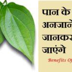 पान के पत्ते खाने के लाभ फायदे हिंदी में