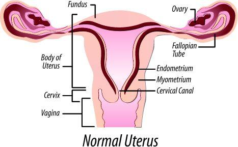 लड़की की योनि