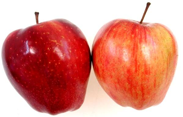 लाल सेब का दान सबसे महान दान